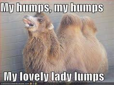 camel humps